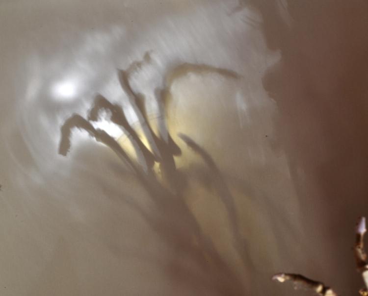Shadow of Bone Sculpture