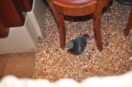 bird in cafe