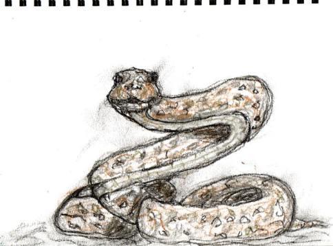 Snake - tinted charcoal