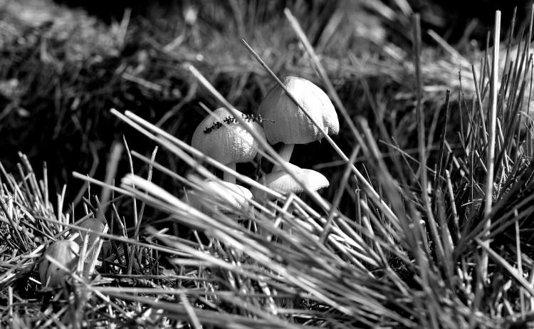 Dawn Whitehand Fungi