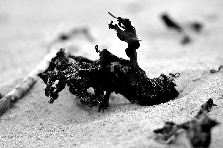 seaweed Black and white
