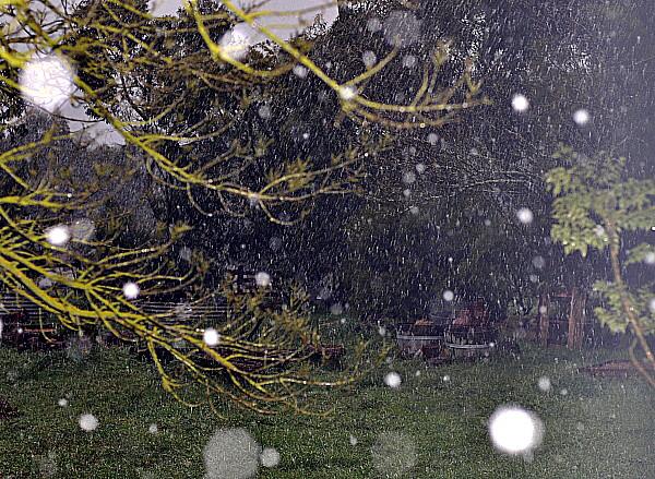 Dawn Whitehand snow