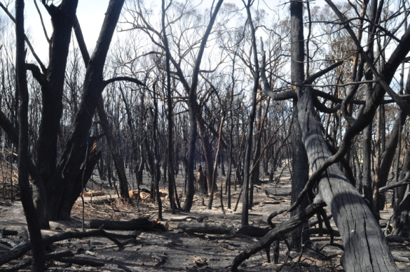 Photo : Dawn Whitehand Scotsburn Bushfires 2015