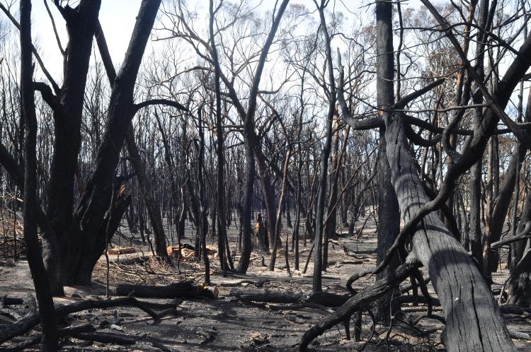Photo : Dawn Whitehand Scotsburn Bushfires 2015