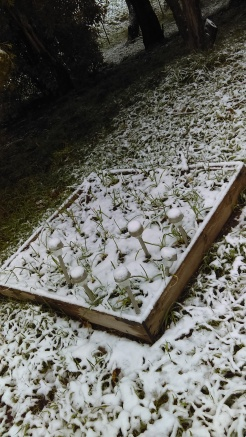 The garlic patch
